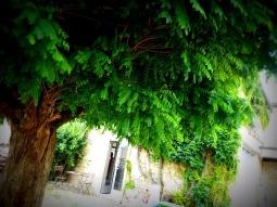 """Le """"gîte"""", printemps-été 2012, acacia"""
