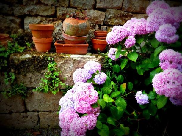 """Le """"gîte"""", printemps-été 2012, hortensia"""