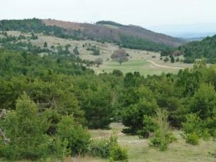 """Sur la montagne de Lure, au loin, le """"hêtre du hussard"""""""