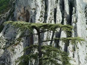Sisteron - Rocher de la Baume