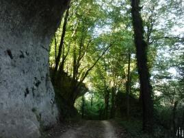 Forêt dans les environs de Marquay